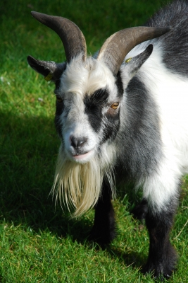 Ranty Friday — What Gets My Goat