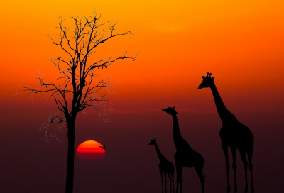 Enjoy a Kenya holiday with your children